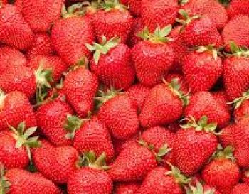 FESTA DE FLORES E MORANGOS DE ATIBAIA 39th Fair of Flowers and Strawberry of Atibaia